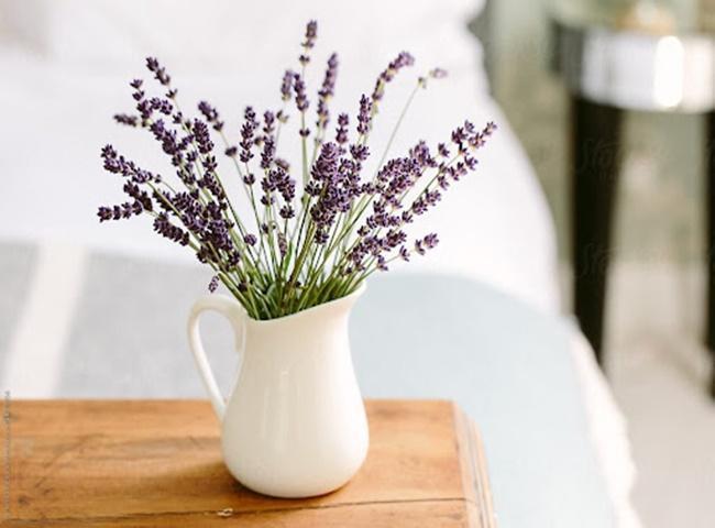 Hoa oải hương mang lại cảm giác thoải mái cho phòng ngủ
